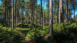 Freshfield nature reserve
